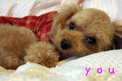 you_20071217222437.jpg