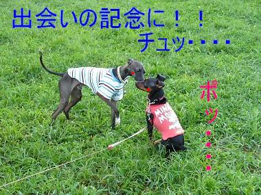 070916 保土ヶ谷公園 03