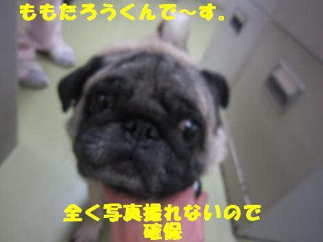 IMG_7142_convert_20110228104807.jpg