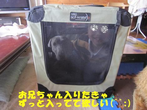 IMG_7542_convert_20110427114200.jpg