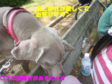 IMG_7863_convert_20110505124514.jpg
