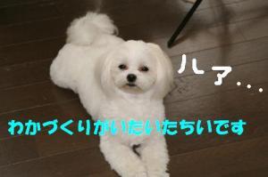 20070521233037.jpg