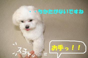 20070526134008.jpg