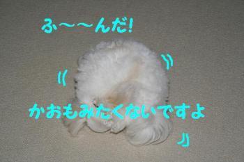 20070604230032.jpg