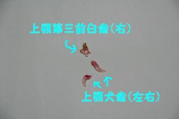 20070614215345.jpg