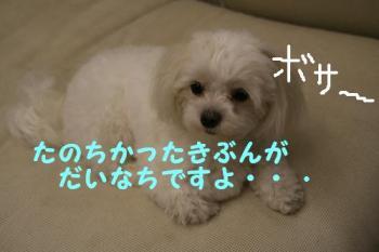 20070619080834.jpg