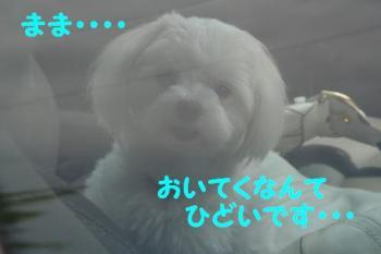 20070622202016.jpg