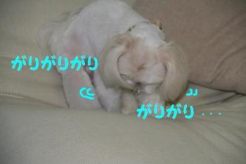 20070706230528.jpg