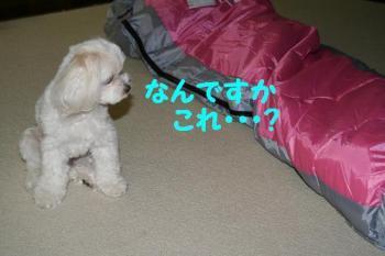 20070712162539.jpg