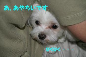 20070717161327.jpg