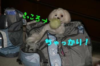 20070719185045.jpg