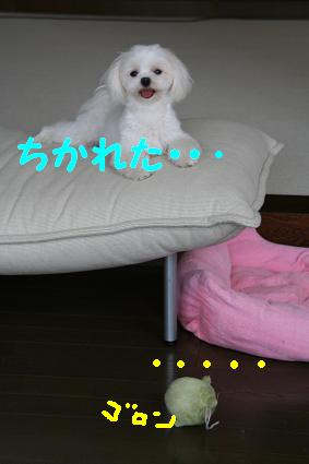 20070807161623.jpg