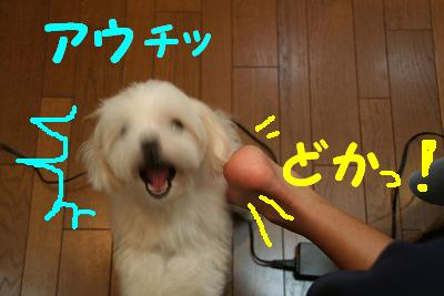 20070830232924.jpg