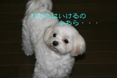 20080108181721.jpg