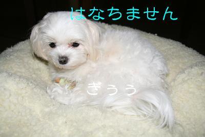 20080124181658.jpg