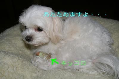 20080124181902.jpg