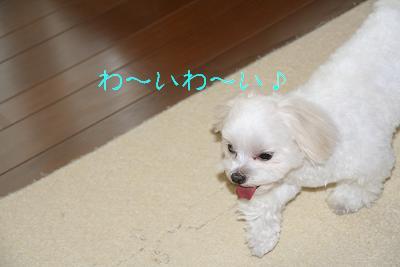 20080211122553.jpg