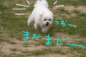 IMG_3379madamada.jpg