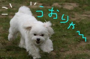 IMG_3380uorya.jpg