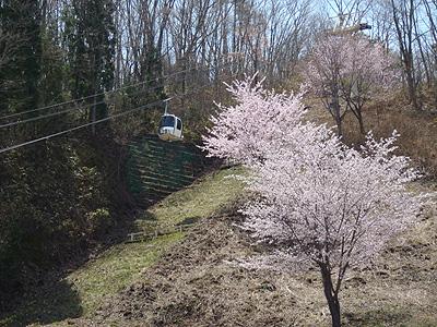 forblogpic_20110505172156.jpg