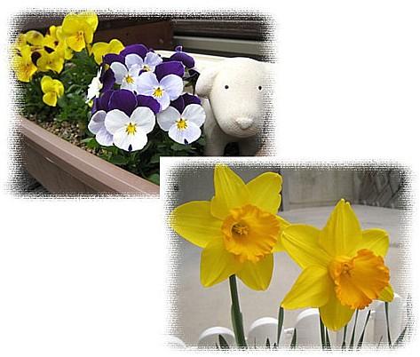 春のお花③