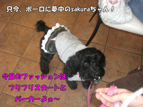 sakuraちゃんのファッション
