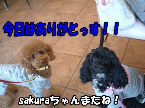 sakuraちゃんありがとう
