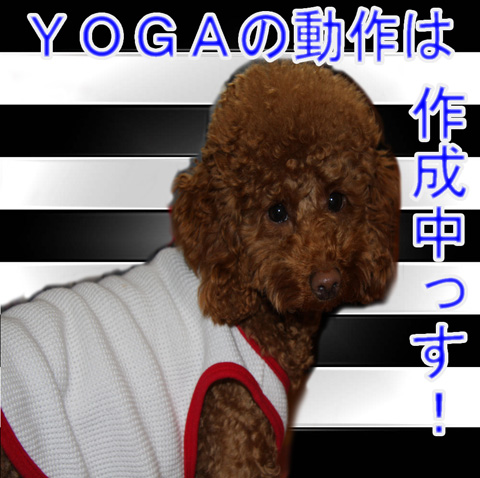 作成中(YOGA)
