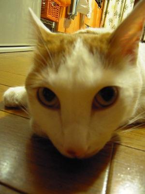 20110625ichigo-2.jpg