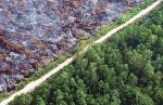 インドネシアの森林