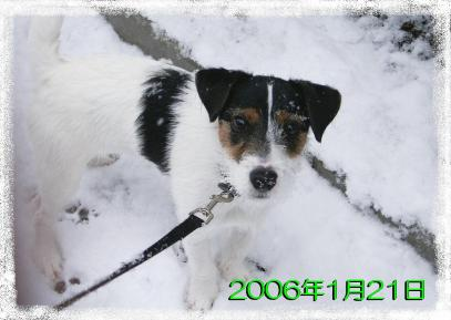 20060121b.jpg