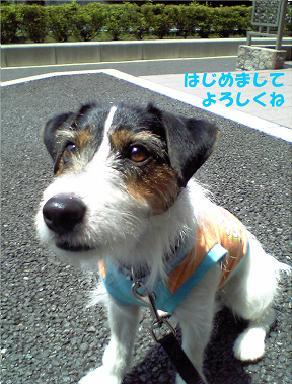 Hello!.jpg