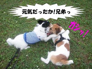 gashi.jpg