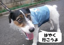 hayakuikouyo.jpg