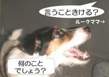 iukotokikeru.jpg