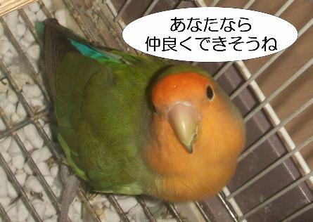 momochan.jpg