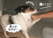 ottoyabai.jpg