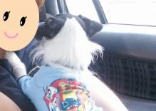 superdog_kaeri.jpg