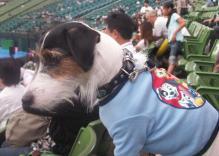 superdog_luke.jpg