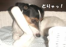 torya.jpg