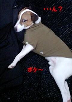 寝る犬4-1