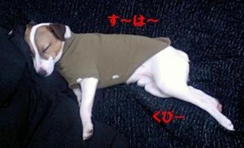 寝る犬1-1