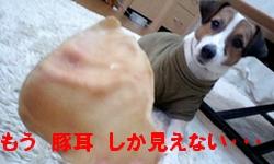 PA0_15.jpg