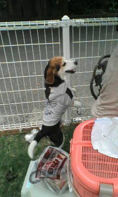 DogCafe9
