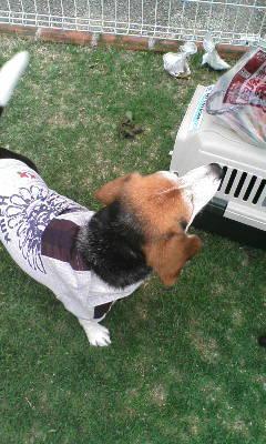 DogCafe11