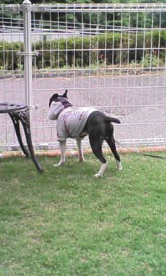 DogCafe13