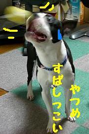 CIMG 0963.JPG
