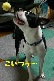 CIMG 0968.JPG