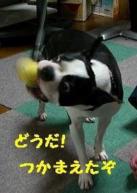 CIMG 0991.JPG