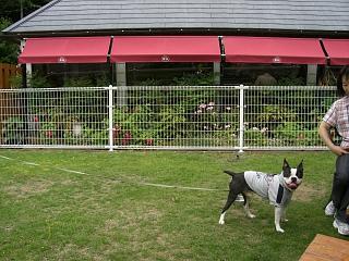 DogCafe4